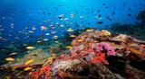 PG Tufi Resort bunte Korallen