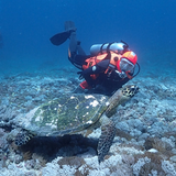 The turtle doesn't mind the bright orange colour of Seareq's Little Red Diving Hood