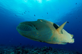 Diving with Sam's Tours