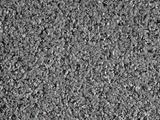 poligras grau