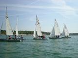 Lis Flotte