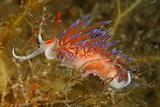shrimp cave