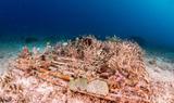 Amun ini Reef Relief