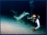Diving Maledives