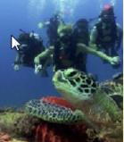 5 Days 4 Nights Raja Ampat Snorkeling