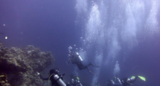 House Reef Diving